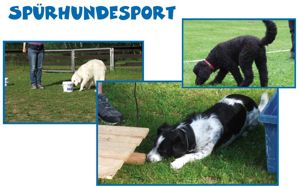 1-Arheilger-Muckertag-Plakate-Spürhundesport